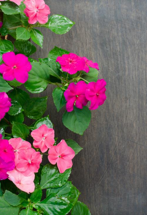 12 esente de plante pentru cele 12 semne ale zodiacului