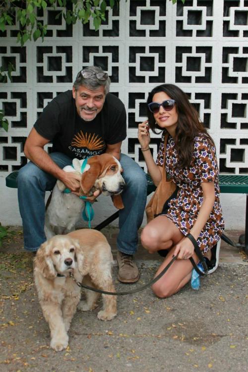 Amal si George Clooney au adoptat un catel!
