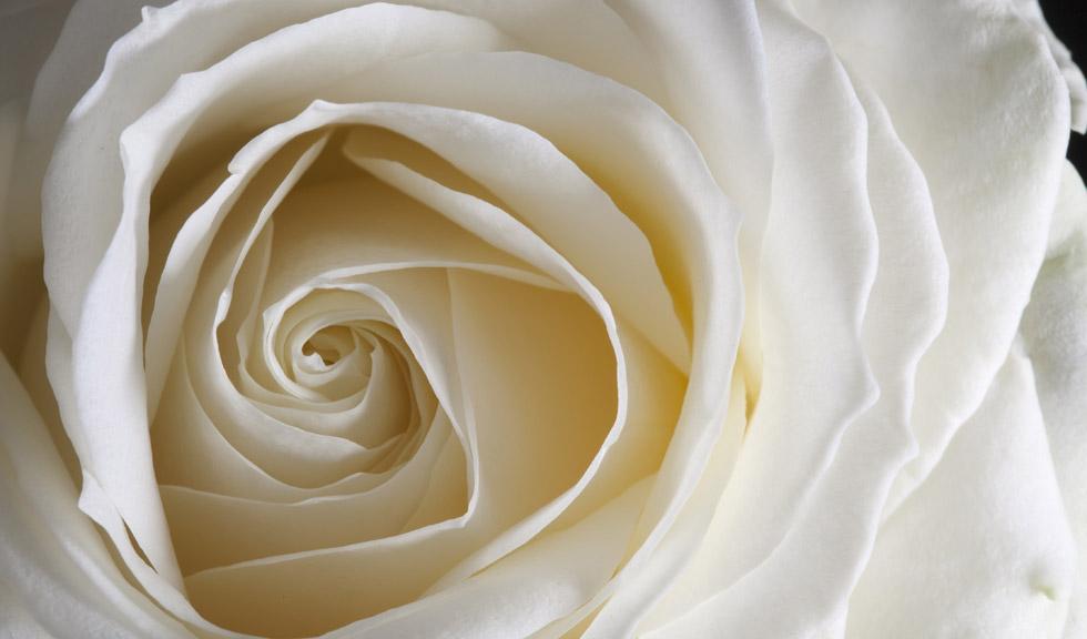 De ce vom vedea trandafiri albi în ținutele vedetelor la Premiile Grammy