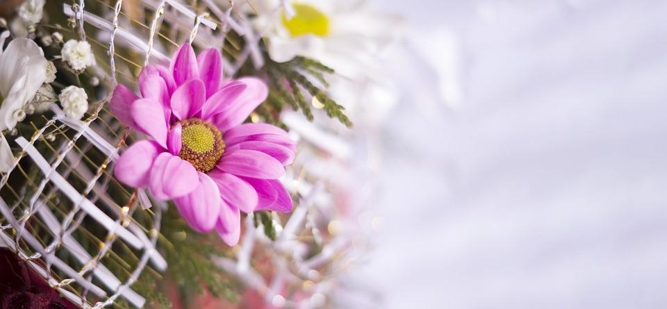 (P) Cele mai frumoase flori de 8 martie pentru mama