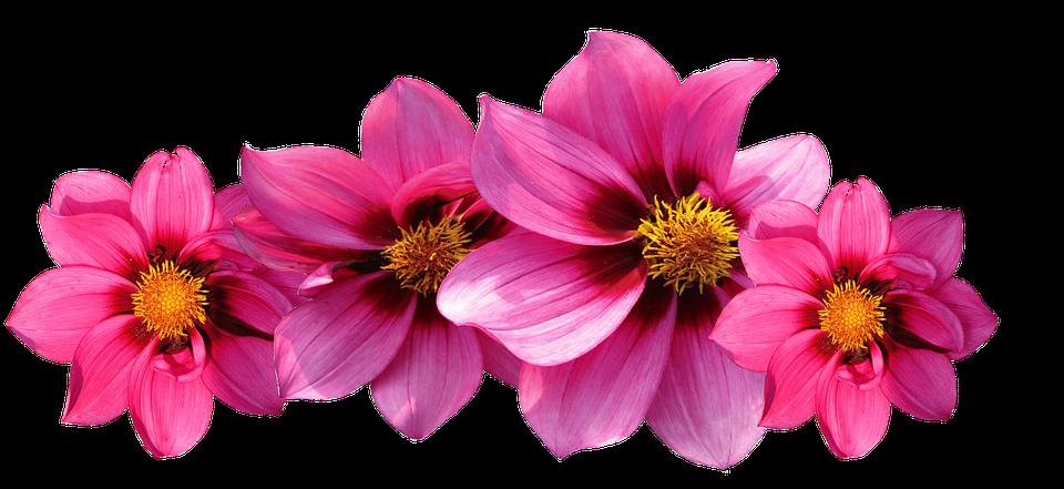 (P) Sărbătorește venirea toamnei cu cele mai frumoase flori de sezon