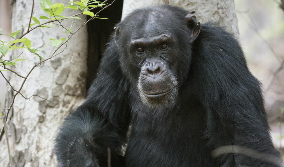 Dinastii – un serial documentar special, despre cele mai cunoscute animale din lume, pe cale de dispariție