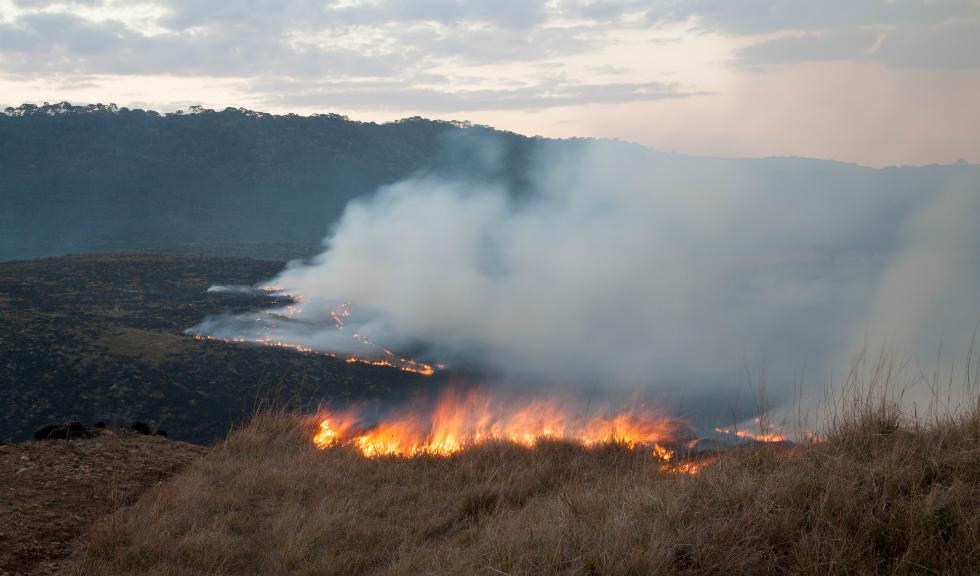 Pădurea Amazoniană arde atât de tare încât incendiile sunt vizibile din spațiu