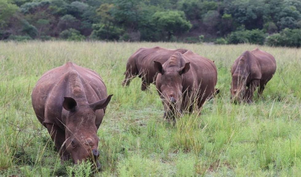 (P) Maria Nila continuă campania de caritate Save the Rhino
