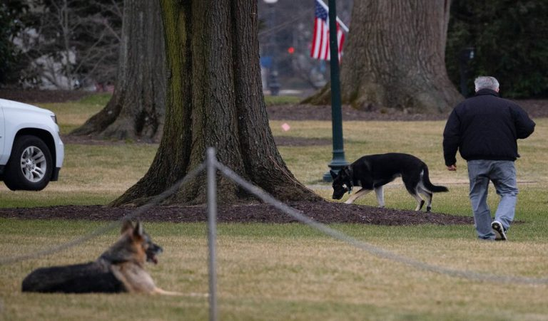 Câinii lui Joe Biden, alungați de la Casa Albă și trimiși acasă în Delaware