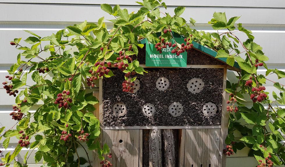 Grădinile urbane sau ce plantăm noi, cu mâinile noastre