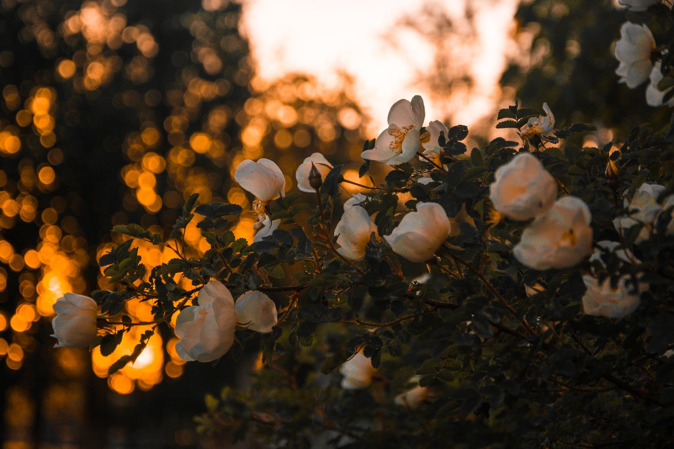 (P) Flori de primăvară pentru iubită