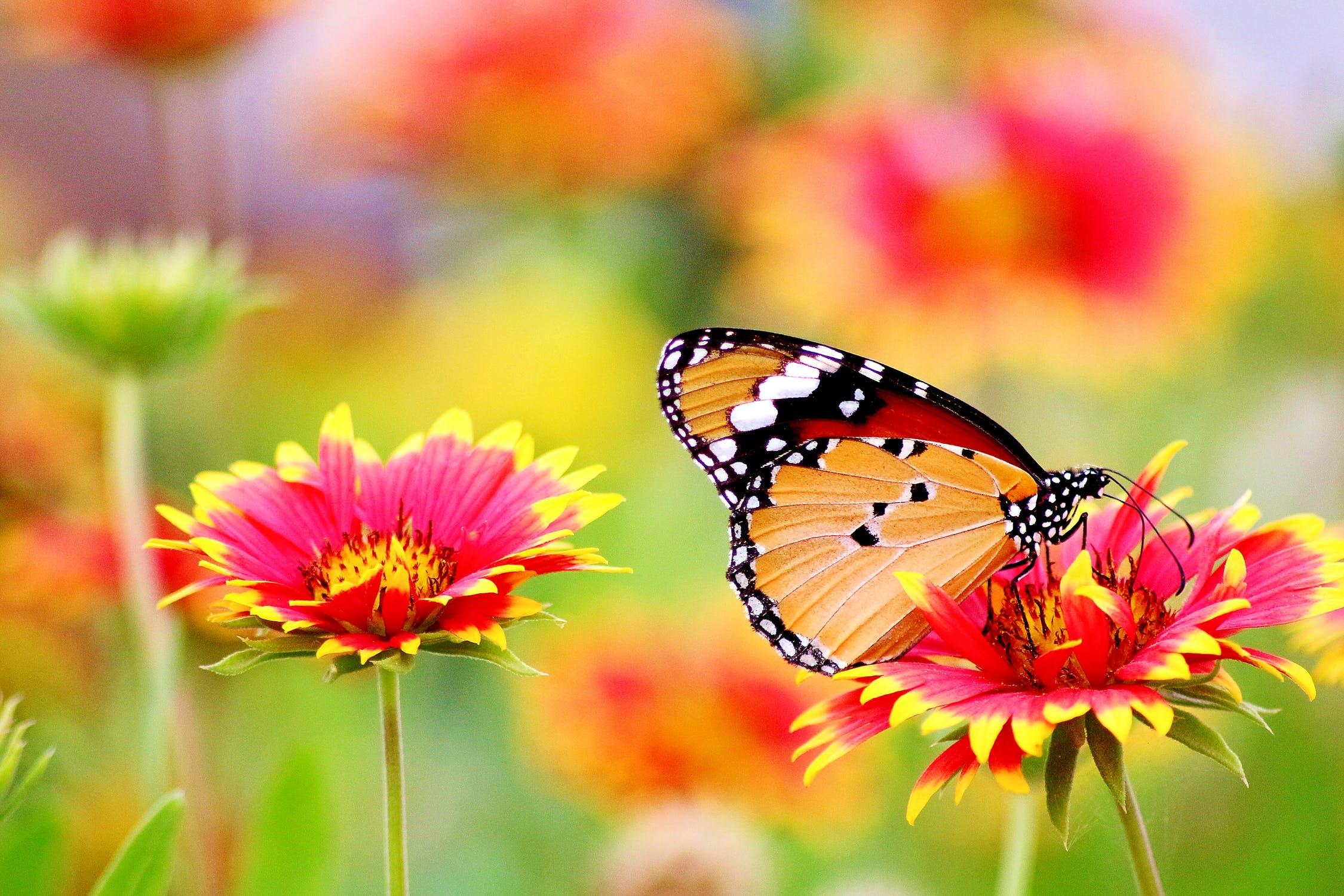(P) Care sunt cele mai iubite flori ale lunii Mai?