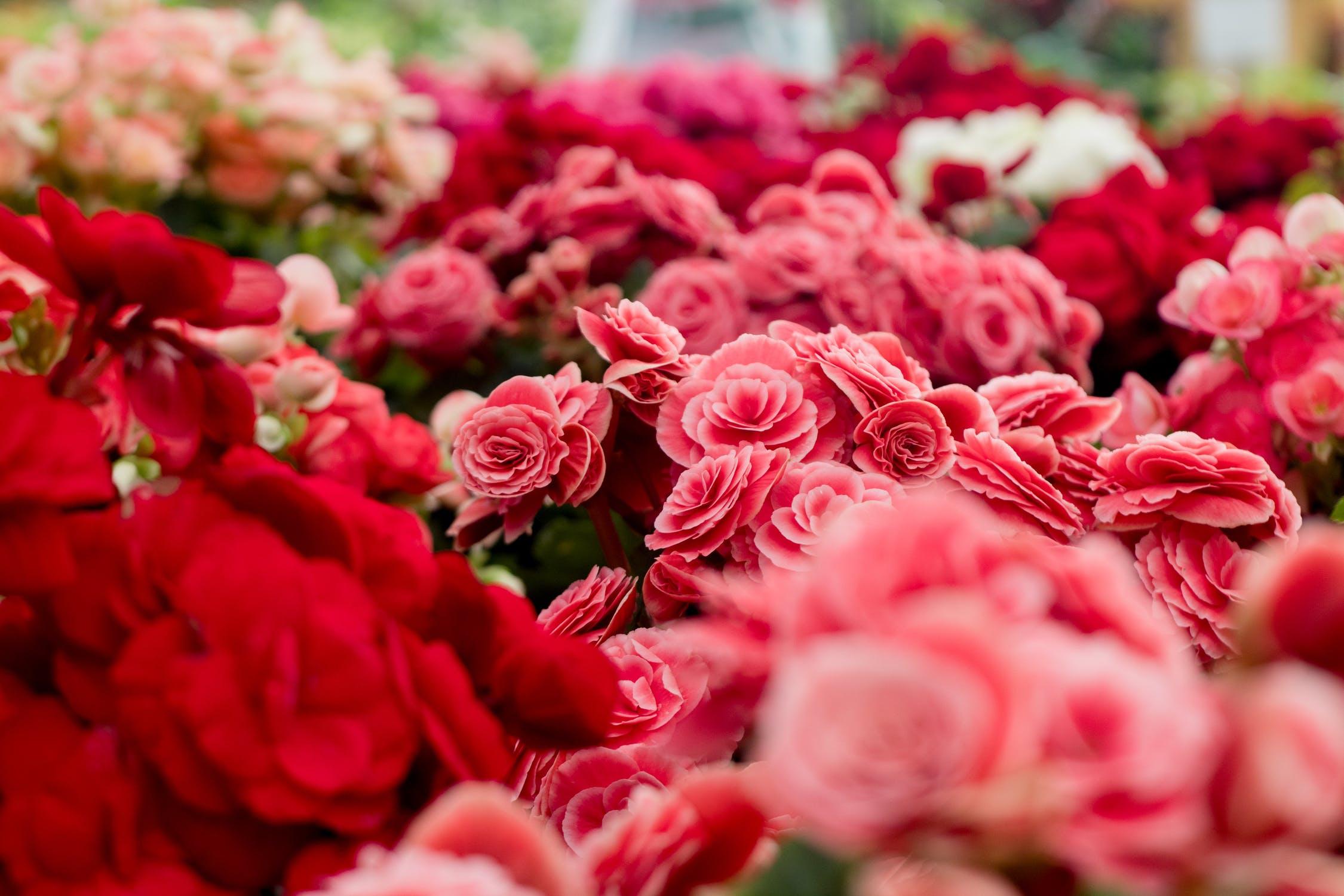 (P) Cum alegi decorul floral pentru ziua nunții? Experții Maison d'Or îți spun toate secretele