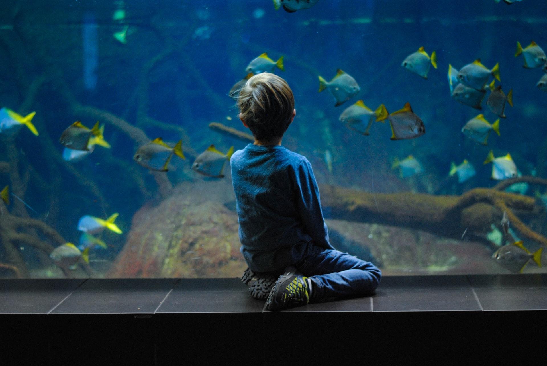Ghidul mămicilor: Cum descoperi și susții pasiunile copilului tău?